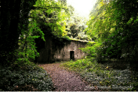 This is an old abandoned house in an Irish forest. Many years ago some dude planted a bomb in there and detonated it. This is what it looks like in 2017.: This is an old abandoned house in an Irish forest. Many years ago some dude planted a bomb in there and detonated it. This is what it looks like in 2017.