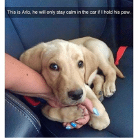 This is Arlo, he will only stay calm in the car if l hold his paw I will gladly hold your little paw, Arlo 🐾