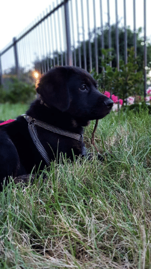 Watches, World, and The World: This is Bailey. He is too young to go to the park so he watches the world from the garden.