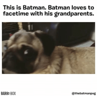Just some quality family time 🐶📲 . @thebatmanpug: This is Batman. Batman loves to  facetime with his grandparents.  BARK BOX  @thebatmanpug Just some quality family time 🐶📲 . @thebatmanpug
