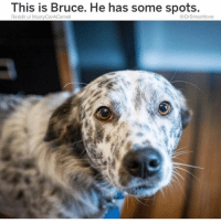 "5 Am, Bless Up, and Bruh: This is Bruce. He has some spots.  Reddit u/ MustyCarACsmell  @DrSmashlove Say Bruh u wanna know when u grown? Like the exact moment that u a grown up? When u ""sleep in"" but it's still early 😂. U feel me? Like there was a time in my life when ""sleep in"" meant 1:30 pm. One MF thirty. Like literally the day is shot. Done. No day that starts at 1:30 pm entails any type of success. Zero. That day is a total loss. A tax write off. Ain no ""rise and grind 😌"" at 1:30 pm more like ""rise and eat a bowl of a cereal like an A$$HOLE and reflect on your insignificance in the universe"" 🤗. Nah. I was texting with my lil homegirl who's a physician and she say she woke up at 8:30 am and I'm like ""oh nice you slept in!"" And she did! She usually up at 5 am shoving needles into people! But then I caught myself 😧. Right then and there I caught myself Bruh. And a feeling of mild sadness came over me whilst on the stair master at 8:36 am on a Saturday. WE GROWN. I'M GROWN. 8:30 AM IS NOT SLEEPING IN. BUT IF U GROWN, 8:30 AM IS A COT DAMN VACATION. U wake up so refreshed that it feel 'wrong' 😂. Like ya anxiety come knocking like ""AYE BRUH U MISSED A APPOINTMENT. A CONFERENCE CALL. BREAKFAST WITH A CLIENT. U MISSED EVERYTHING IT'S 8:30 COT DAMMIT WHAT A FAILURE LOL LIKE WHAT HAVE U *ACTUALLY* ACCOMPLISHED? LOOK AT EVAN SPIEGEL. DEVELOPED A APP WHERE U COULD SEND DISAPPEARING PICS OF YA T!TTIES NOW AT AGE 27 HE WORTH 4.1 BILLY WHAT CHU WORTH? EXACTLY SMASH WAY LESS THAN 4 BILLY BC U WOKE UP AT 8:30 OL SLEEP ALL DAY LOOKIN A$$ EVAN 👏 SPIEGEL 👏 AINT 👏 WAKING 👏 UP 👏 AT 👏 8:30."" (Incidentally my anxiety sound like a mother who push her kids too hard 🐸☕️. Shout to my anxiety tho. Some people got a angel on they shoulder. I got skrong anxiety clutching a chancleta above my head bout to whup my a$$ for not grinding hard enuf EVERYBODY'S DIFFERENT THIS IS HOW I'M BUILT BLESS UP 😂😂😂)"