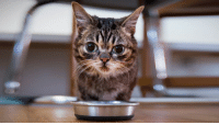 This is BUB every night as I prepare her food.: This is BUB every night as I prepare her food.