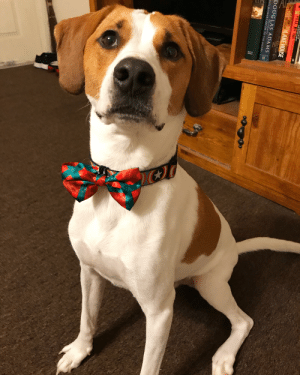 This is Bucky. All dressed up and nowhere to go.: This is Bucky. All dressed up and nowhere to go.