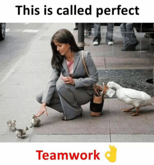 Memes, 🤖, and Teamwork: This is called perfect  Teamwork