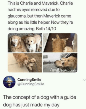 Charlie, Good, and Amazing: This is Charlie and Maverick. Charlie  had his eyes removed due to  glaucoma, but then Maverick came  along as his little helper. Now they're  doing amazing. Both 14/10  oAccurate  CunningSmile  @CunningSmile  The concept of a dog with a guide  dog has just made my day This made me feel good