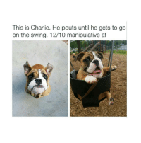 Memes, 🤖, and Manipulation: This is Charlie. He pouts until he gets to go  on the swing. 12/10 manipulative af good dog