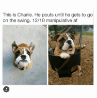 Af, Charlie, and Memes: This is Charlie. He pouts until he gets to go  on the swing. 12/10 manipulative af 12/10