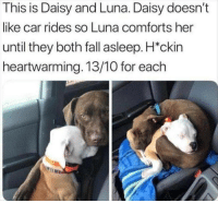Fall, Amazing, and Her: This is Daisy and Luna. Daisy doesn't  like car rides so Luna comforts her  until they both fall asleep. H*ckin  heartwarming. 13/10 for each Heckin amazing