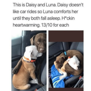 Literally they weren't wrong.. 13/10: This is Daisy and Luna. Daisy doesn't  like car rides so Luna comforts her  until they both fall asleep. H'ckin  heartwarming. 13/10 for each Literally they weren't wrong.. 13/10