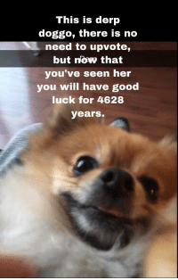 Memes, Tumblr, and Blog: This is derp  doggo, there is no  need to upvote,  but nowv that  you've seen her  you will have good  luck for 4628  years. awesomacious:  Have a nice day guys. (X post from r/memes)