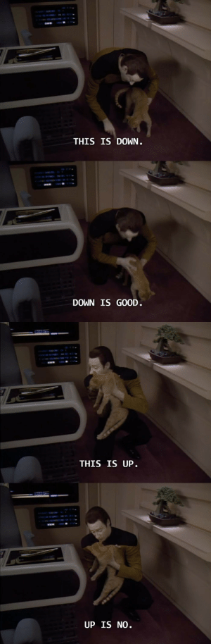 dedalvs:  rapacityinblue:  rubyvroom:  stonelionhearts:  one of the most brilliant exchanges ever written for television tbh  I mean as story decisions go, giving Data a cat and the screentime to try to logically reason with the cat with very little success, thus letting the robot embody Every Cat Owner Ever, was A+  Please do not forget:   I will feed and give water to your…animal… : THIS IS DOWN   DOWN IS GOOD.   THIS IS UP   UP IS NO. dedalvs:  rapacityinblue:  rubyvroom:  stonelionhearts:  one of the most brilliant exchanges ever written for television tbh  I mean as story decisions go, giving Data a cat and the screentime to try to logically reason with the cat with very little success, thus letting the robot embody Every Cat Owner Ever, was A+  Please do not forget:   I will feed and give water to your…animal…
