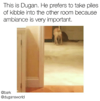 Memes, 🤖, and Piles: This is Dugan. He prefers to take piles  of kibble into the other room because  ambiance is very important.  @bark  @dugansworld It tastes better in here idk . Original vid via @dugansworld
