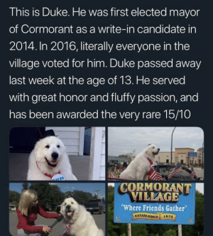 "Friends, Duke, and Peace: This is Duke. He was first elected mayor  of Cormorant as a write-in candidate in  2014. In 2016, literally everyone in the  village voted for him. Duke passed away  last week at the age of 13. He served  with great honor and fluffy passion, and  has been awarded the very rare 15/10  CORMORANT  ILLAGE  Where Friends Gather""  ESTABLISHED 1874  el Rest in peace Duke"