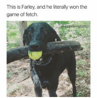 You can't have your cake and eat it too... touché Farley. Via @blackdogaffairs Pup @jackeemarie: This is Farley, and he literally won the  game of fetch.  dogsbeingbasio You can't have your cake and eat it too... touché Farley. Via @blackdogaffairs Pup @jackeemarie