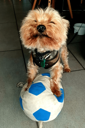 Proud, Ball, and Fernando: This is Fernando. Fernando is very proud of his ball.
