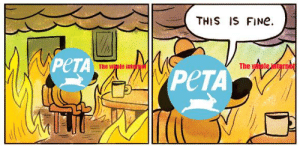 RIP Steven Irwin: THIS IS FINe  PeTA  The wple inter  The whole internet RIP Steven Irwin