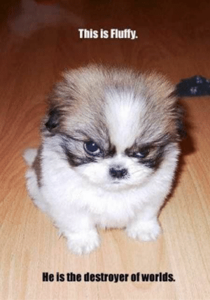 Dog Memes Of The Day 32 Pics – Ep37 #dogs #doglovers #lovelyanimalsworld - Lovely Animals World: This is Fluffy  He is the destroyer of worlds. Dog Memes Of The Day 32 Pics – Ep37 #dogs #doglovers #lovelyanimalsworld - Lovely Animals World