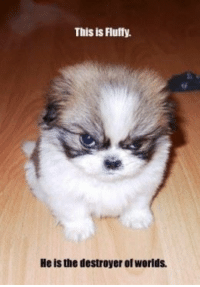 Yes!  Visit Us At: =====> http://LoveMyPet.Deals: This is Fluffy.  Heis the destroyer of Worlds. Yes!  Visit Us At: =====> http://LoveMyPet.Deals