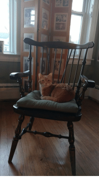 Family, Grandma, and Time: This is George. Ever since my family inherited this chair from my Grandma, he has spent almost all of his time in it.