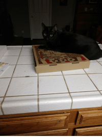 Pizza, Cat, and Panther