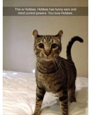 awesomacious:  Mind control doesn't wo.. I LOVE HOBBIES: This is Hobbes. Hobbes has funny ears and  mind control powers. You love Hobbes. awesomacious:  Mind control doesn't wo.. I LOVE HOBBIES