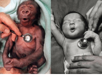 Memes, Cold, and Baby: This is how a baby gorilla & baby human react to a cold stethoscope.  https://t.co/Or7brDtkHf