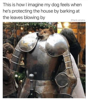 Pupper is love and life.: This is how I imagine my dog feels when  he's protecting the house by barking at  the leaves blowing by  @tank.sinatra Pupper is love and life.
