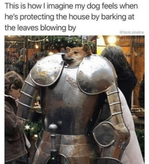 He P R O T E C C: This is how I imagine my dog feels when  he's protecting the house by barking at  the leaves blowing by  @tank.sinatra He P R O T E C C