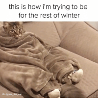 Memes, Mood, and Winter: this is how i'm trying to be  for the rest of winter  G: @yves the cat BIG mood