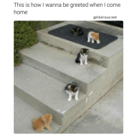 Memes, Ted, and Coming Home: This is how wanna be greeted when come  home  @hilarious.ted Reminder that you're going to be a 40 year old cat lady. (@hilarious.ted)