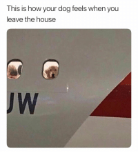 Facts, House, and How: This is how your dog feels when you  leave the house  JW Facts 😂💯 https://t.co/4nZgUi0ChE
