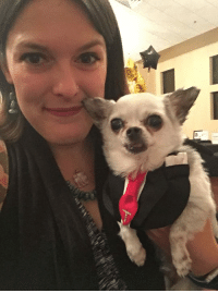 This is Ike the Itty Bitty's mom who also gave me snuggles at National Mill Dog Rescue's benefit gala.  Stop over and say Hi to them too!: This is Ike the Itty Bitty's mom who also gave me snuggles at National Mill Dog Rescue's benefit gala.  Stop over and say Hi to them too!