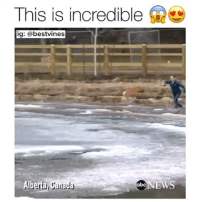 ⠀ 🌱Id Do The Same For My Dog! 😍: This is incredible  ig: a bestvines  Alberta Canada  abc  NEWS ⠀ 🌱Id Do The Same For My Dog! 😍