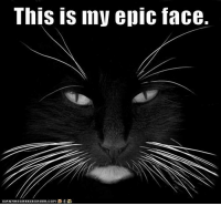 epic face: This is iny epic face.