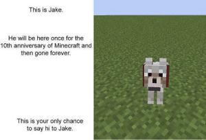 Dank, Memes, and Minecraft: This is Jake.  He will be here once for the  10th anniversary of Minecraft and  then gone forever.  This is your only chance  to say hi to Jake. It's your only chance by bloxiefox MORE MEMES