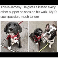 I'm having a bad day so here are some dogs dogs puppy: This is Jamesy. He gives a kiss to every  other pupper he sees on his walk. 13/10  such passion, much tender I'm having a bad day so here are some dogs dogs puppy