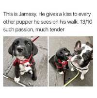 Memes, Butterfly, and Kiss: This is Jamesy, He gives a kiss to every  other pupper he sees on his walk. 13/10  such passion, much tender Follow my other accounts @antisocialtv @lola_the_ladypug @x__antisocial_butterfly__x ❤️