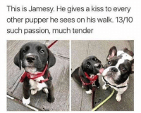 This is fucking cute as hell - that is all: This is Jamesy. Hegives a kiss to every  other pupper he sees on his walk. 13/10  such passion, much tender This is fucking cute as hell - that is all