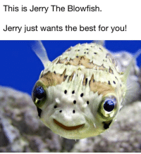 "This is Jerry The Blowfish  Jerry just wants the best for you! <p>I'm with Jerry on this one! via /r/wholesomememes <a href=""https://ift.tt/2Hkj8Xg"">https://ift.tt/2Hkj8Xg</a></p>"