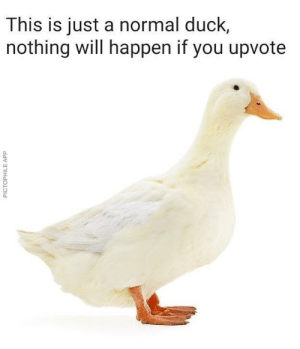 Dank, Memes, and Target: This is just a normal duck,  nothing will happen if you upvote  0  0 Like in under 5 seconds for: nothing by allnightinternets MORE MEMES