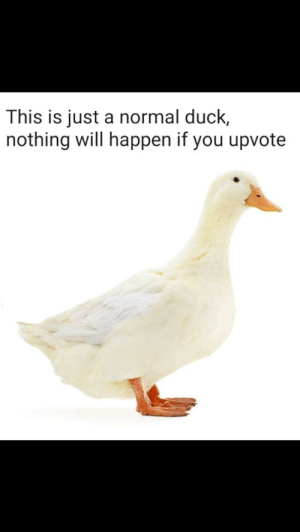 Dank, Memes, and Target: This is just a normal duck,  nothing will happen if you upvote Nothing will happen by randomshit89 MORE MEMES