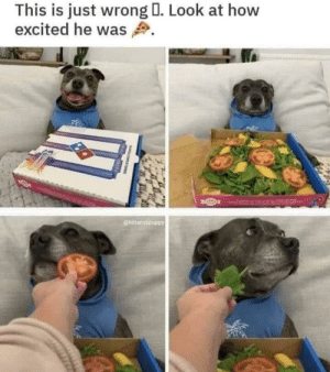 Why, Just Why?: This is just wrong I. Look at how  excited he was  @kittenvspuppy Why, Just Why?