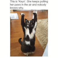 Funny, Her, and Air: This is 'Keys'. She keeps putting  her paws in the air and nobody  knows why. PUT YOUR HANDS UP IN THE AIR (Swipe for more)
