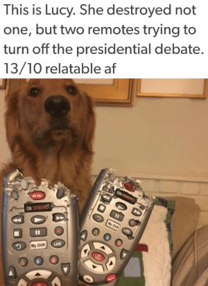 Af, Tumblr, and Twitter: This is Lucy. She destroyed not  one, but two remotes trying to  turn off the presidential debate.  13/10 relatable af   All On  ON DEMAND  5  My DVR  LIVE  My DVR  Info  Menu  Page lumos5001:  animalrates:via @sara a good dog