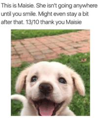 """Thank You, Http, and Smile: This is Maisie. She isn't going anywhere  until you smile. Might even stay a bit  after that. 13/10 thank you Maisie <p>G O O D D O G G I E via /r/wholesomememes <a href=""""http://ift.tt/2vqVUVr"""">http://ift.tt/2vqVUVr</a></p>"""