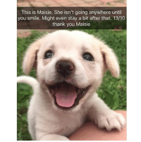 Memes, Thank You, and Animal: This is Maisie. She isn't going anywhere until  you smile. Might even stay a bit after that. 13/10  thank you Maisie Just a few animal snaps to start your day | @cuteandfuzzybunch