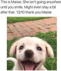 Thank You, Http, and Smile: This is Maisie. She isn't going anywhere  until you smile. Might even stay a bit  after that. 13/10 thank you Maisie A smile can change your day via /r/wholesomememes http://bit.ly/2BFf5Qw