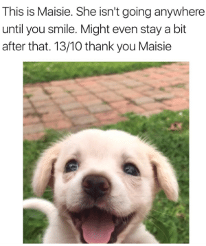 Thank You, Smile, and She: This is Maisie. She isn't going anywhere  until you smile. Might even stay a bit  after that. 13/10 thank you Maisie Thank you Maise!!