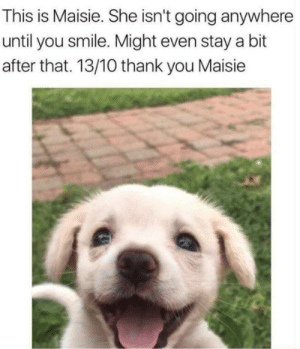 Thank You, Smile, and She: This is Maisie. She isn't going anywhere  until you smile. Might even stay a bit  after that. 13/10 thank you Maisie You have to smile