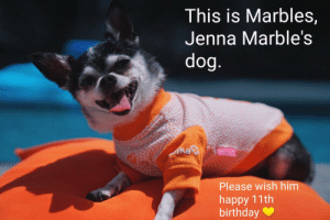 Birthday, Happy, and Jenna Marbles: This is Marbles,  Jenna Marble's  ka  Please wish him  happy 11th  birthday me irl